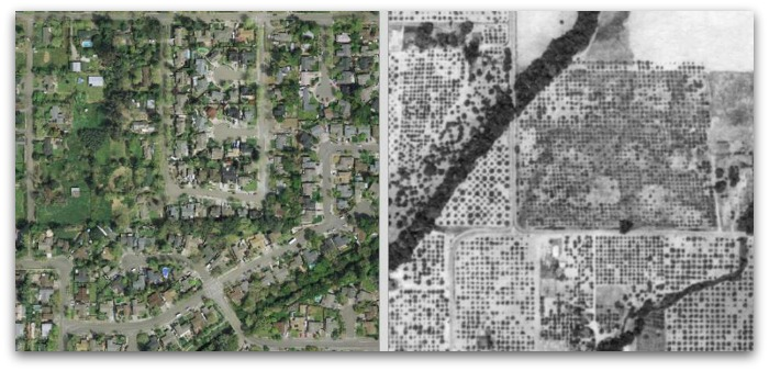 1942 and 2011 Aerials of the Santa Rosa Plain